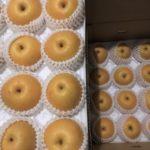 【鳥取県湯梨浜町】ふるさと納税で購入した新興梨10kgが届きました🍏