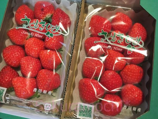 香川県三木町ふるさと納税-さぬきひめ苺