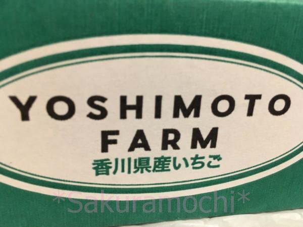 香川県三木町ふるさと納税-YOSHIMOTO FARM 香川県産いちご