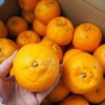 【高知県東洋町】ふるさと納税で購入したおひさまのオレンジ5kg(4,000円)が届きました🍊💕
