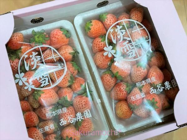 白くない?-熊本県玉名市ふるさと納税「白いちご淡雪1.4kg」