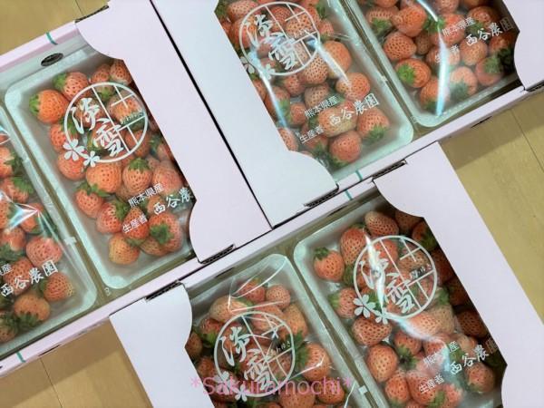 結構赤いですが大量です♪-熊本県玉名市ふるさと納税「白いちご淡雪1.4kg」