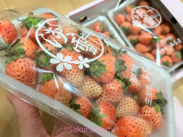 淡雪-熊本県玉名市ふるさと納税「白いちご淡雪1.4kg」