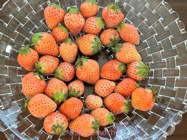 白いちご淡雪-熊本県玉名市ふるさと納税「白いちご淡雪1.4kg」